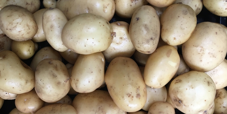 potatoes close up