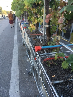 Litter in the grape trolley! Shock Horror!