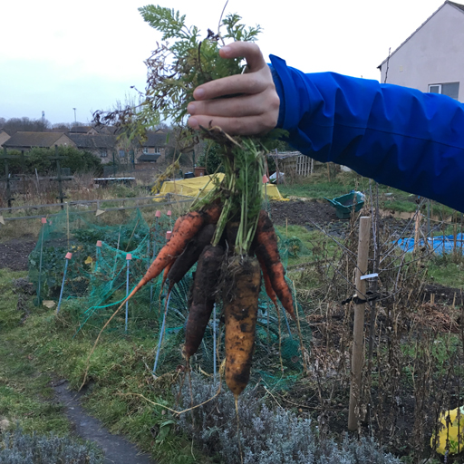 Carrots on New Year's Eve (eve)