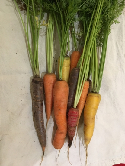 Note the one surviving red carrot