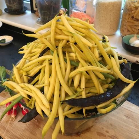 Loads of beans